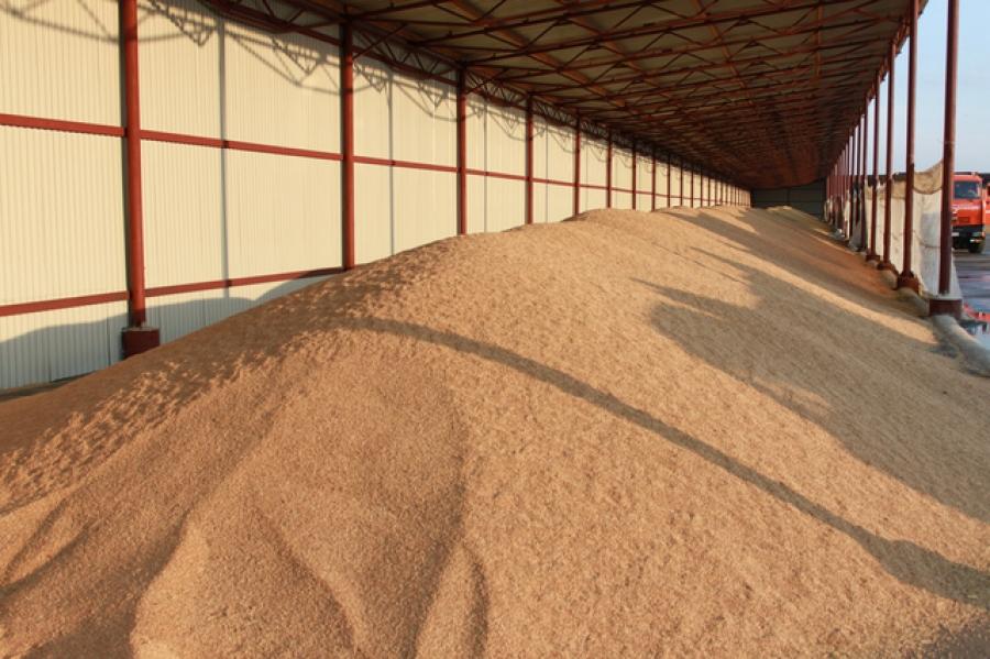 На ДП «Охтирський КХП» триває заготівля зерна