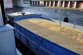 ДП «Златодар» розпочав сезон заготівлі зерна