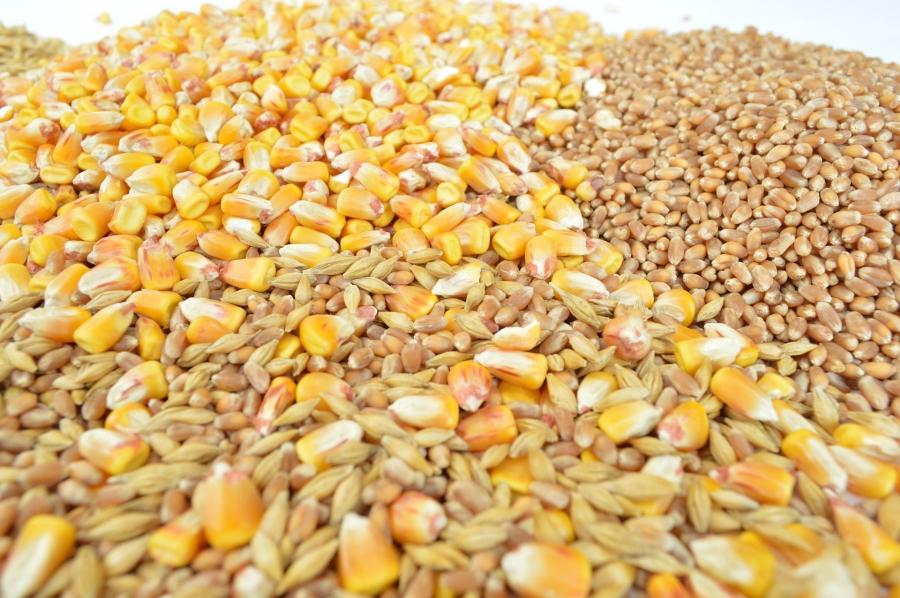 Ціна стартових лотів аукціону з продажу зернових Держрезерву зросла майже вдвічі