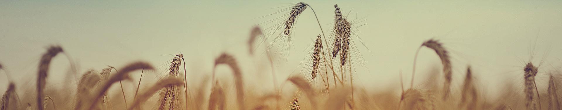 Аграрний напрям